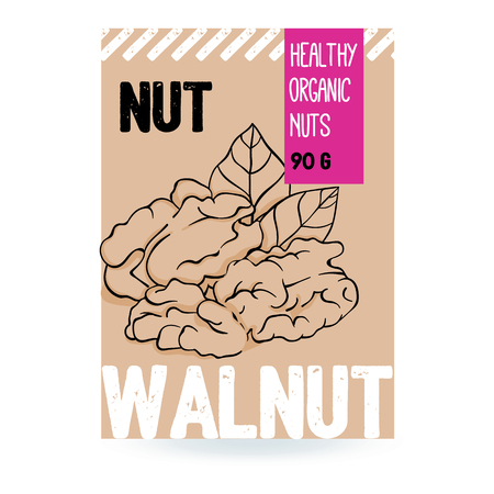 Beautiful vector hand drawn walnut organic nut. Template elements for packaging design. Modern illustrations isolated on white background.