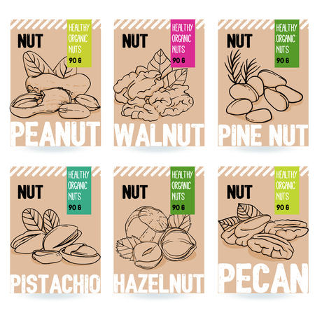 Beautiful vector hand drawn organic nut card set. Walnut, pine nut, pistachio, peanut, hazelnut, pecan. Template elements for packaging design. Modern illustrations isolated on white background.