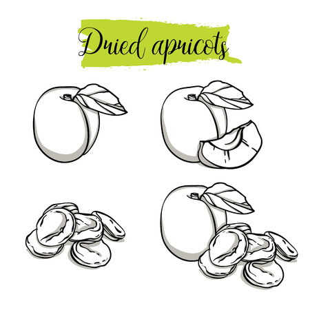 Hand drawn sketch style Apricot set. Single, group fruits, dried apricots. Organic food, vector doodle illustrations collection isolated on white background.