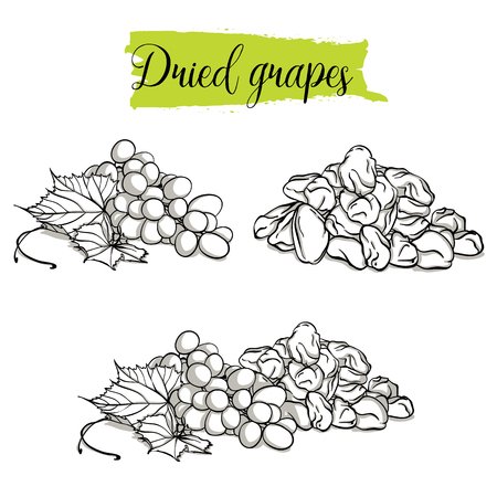 Hand drawn sketch style Grapes set. Single, group fruits, dried, raisin, branch of grapes. Organic food, doodle illustrations collection isolated on white background. Stock Illustratie