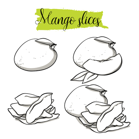 Hand drawn sketch style Mango set. Single, group fruits, dried, slices mango. Organic food, vector doodle illustrations collection isolated on white background.