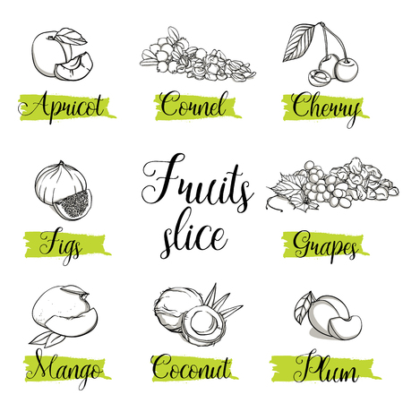 Hand drawn sketch style fruits, nuts and berries. Mango, apricot, plum, fig, grapes, cherry, dogwood, coconut. Organic fruit with leaf, doodle illustrations collection isolated on white background.