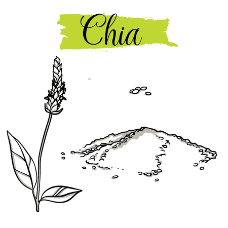 Beautiful hand drawn Chia, seeds. Organic food, doodle illustrations collection isolated on white background.