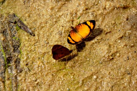 Two small butterfly over wet sand around park