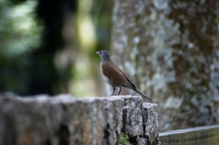 Close up sparrow over a stone wall in a cool scenery