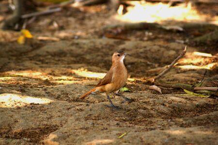 Small Bird living fredon in garden public place and square Standard-Bild