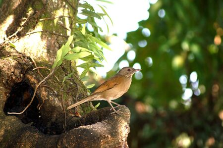 Bird small on trees, living in place public around city and forest yet