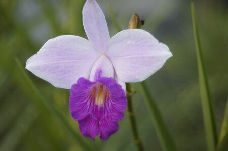 A Fuchsia swing time elegance plant decorative