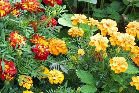 students flower Stock Photo - 10521854