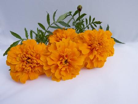 students flower Stock Photo