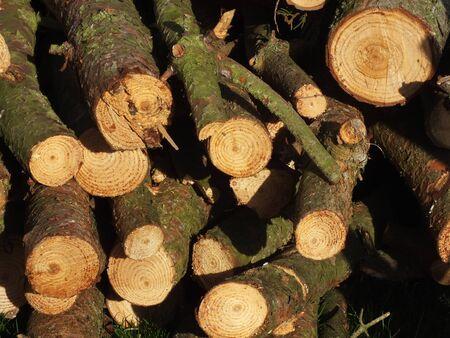 relentless: fire wood Stock Photo