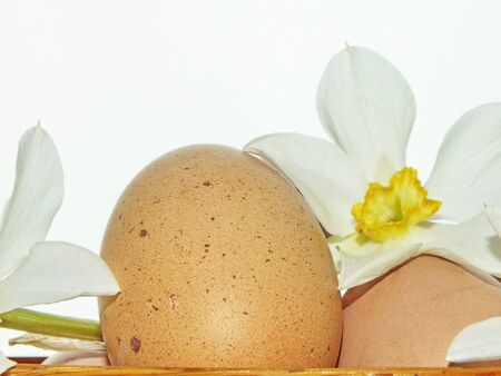 fresh chicken eggs with flowers photo