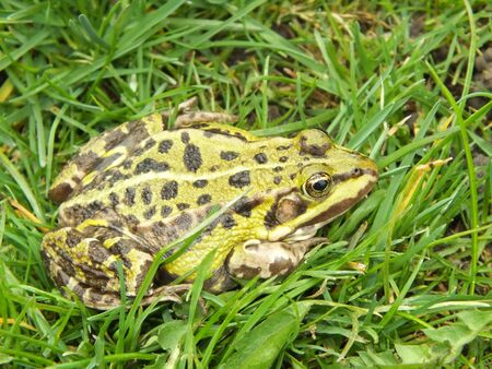 toad living in free nature Stock Photo - 13410399