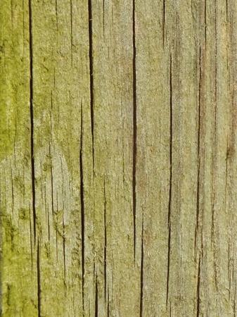 wood Stock Photo - 13566574