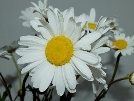 summer flower photo