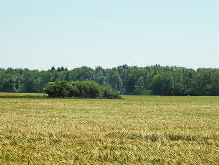 encapsulate: Mecklenburg-Western Pomerania in the field in June, Germany