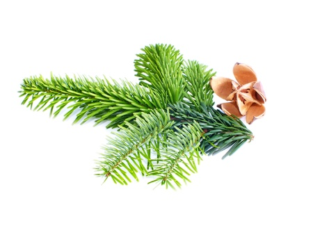 christmas decoration on white background to Stock Photo - 14640650