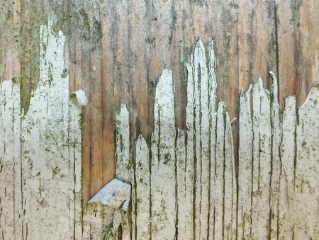 beautiful old wood as a background photo