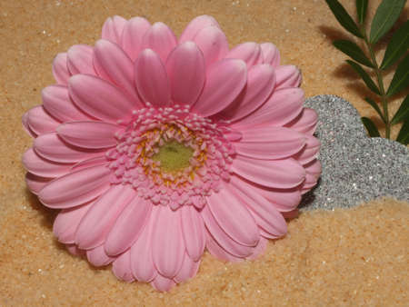 delicate flower as a gift for many occasions Stock Photo - 17448662