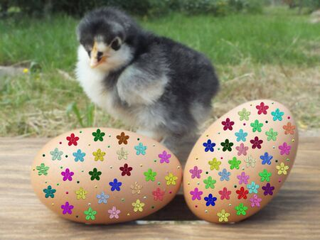 chicken and easter egg photo