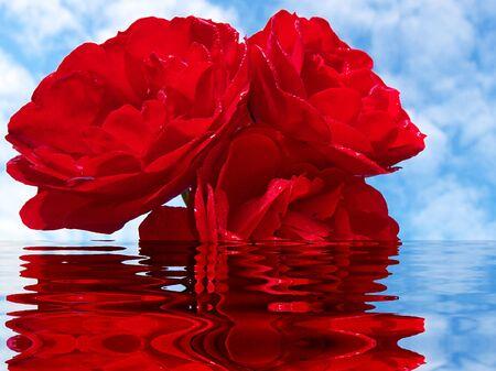 flower Stock Photo - 17703309