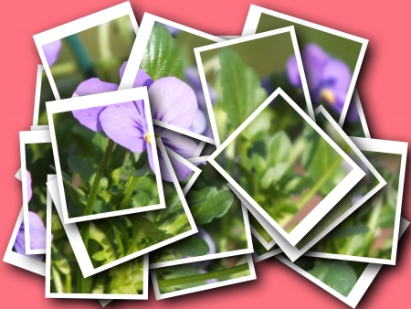 collage of beautiful delicate flower photo