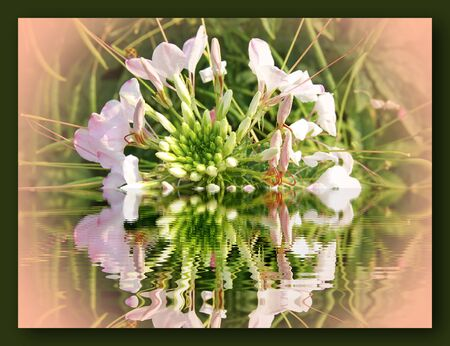 tropical flower reflected in water photo