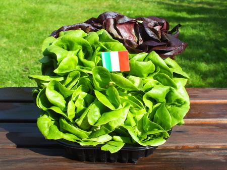 mescaline: green salad