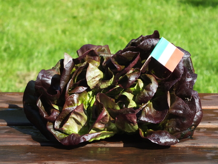 rapunzel: green salad