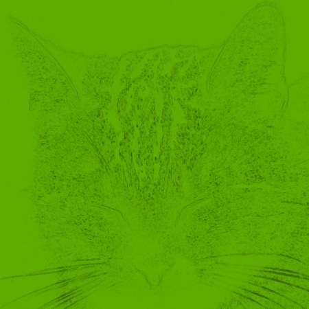 voted: Voted drawn head of a small cat color Stock Photo