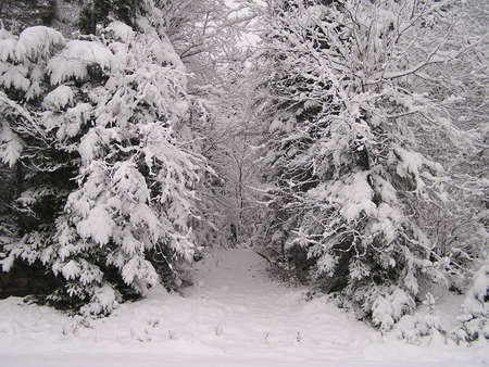 Winter in Quebec, Canada  - November snowfalls Stock Photo - 261577