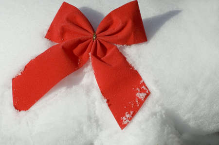 constitutionality: close up of a red velvetey Christmas bow on a natural environment