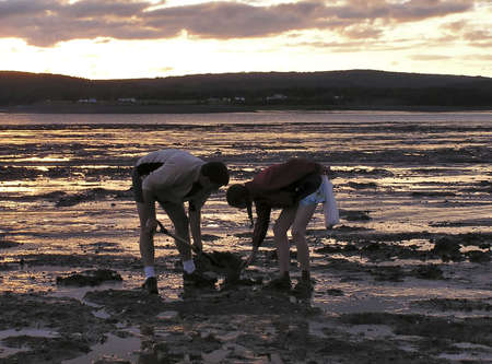 Father and girl digging clams at sunset in  Glooscap, Nova Scotia, Canada