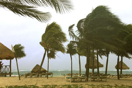 Empty beach with palm trees by a cloudy and windy morning in Caribbean sea, Mexico