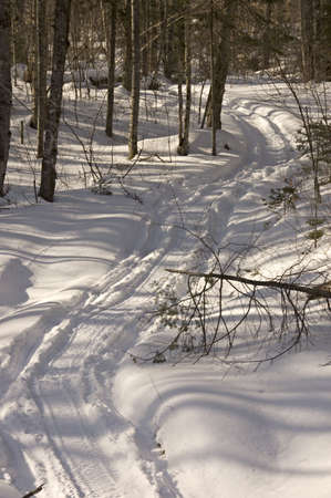 snowmobiles tracks among trees in Quebec forests, Canada Stock Photo - 818394