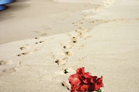 Lost flower and footprints on a  sandy beach