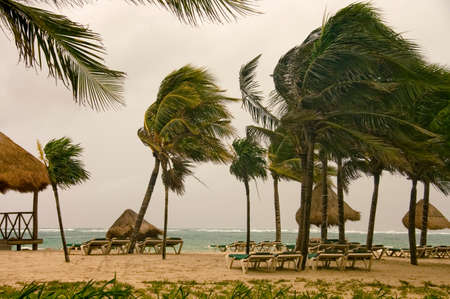empty beach with palm trees by a windy morning in caribbean sea mexico  photo