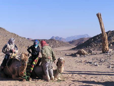 los camellos se reclinan en el desierto de Sáhara, Egipto, África. Foto de archivo - 1799622