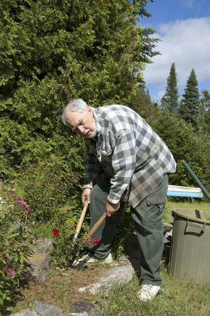 Elderly gardener cutting roses in his garden