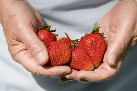 close-up picture of hands full of fresh strawberries Stock Photo - 3177614