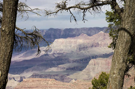 Grand Canyon between the trees, Grand Canyon National Park Arizona, USA Banco de Imagens - 4107201