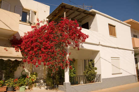 CRETE, GREECE - MAY 13TH; typical white stucco greek house with bougainvillas in front, Crete island, Greece, 13 May 2007