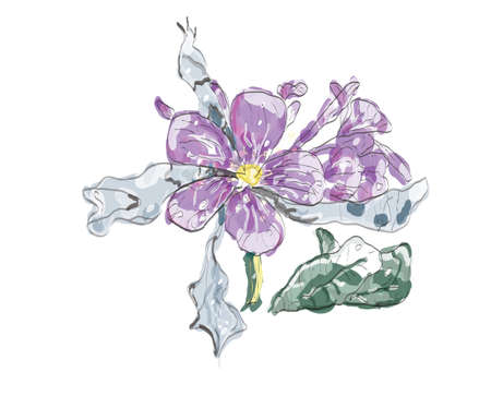 purple Jasmin flower in watercolor in a white background, EPS 10
