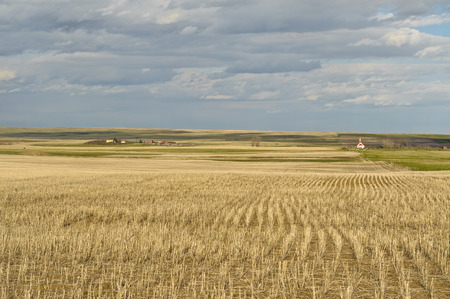 scenic view of wheat field in Canadian Prairies and small village of Mankota  in background  Saskatchewan
