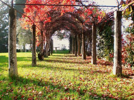 Lake Iseo, garden, autumn.
