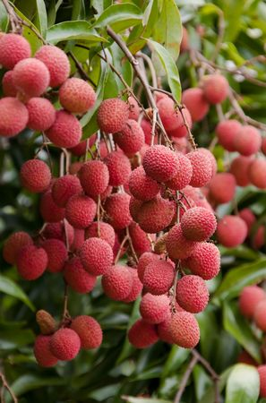 Lychee grape Stock Photo