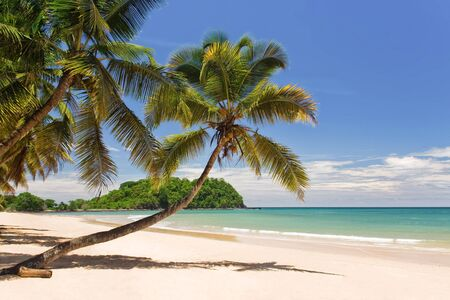 Coconuts, palm trees and sandy white beach in turquoise waters photo