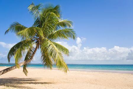 Coconut on the beach of Sainte Marie island, Madagascar