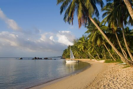 Tropical paradise landscape, beach and palm trees with sailboat