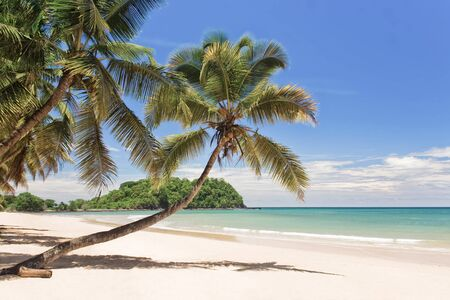 Coconuts on the beach photo